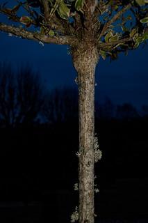Gray tree trunk