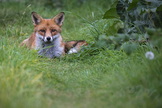 Smiling Foxy ❤️