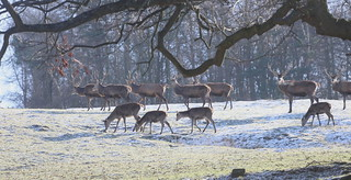 Deer on the Move