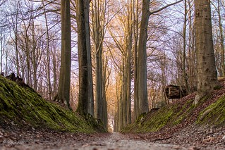 Path to winter light