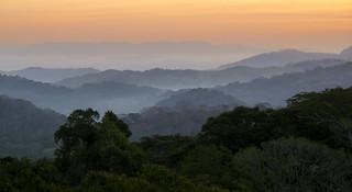 Panama Sunrise 113q-2161