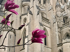 Magnolia and Cathedral