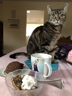 Breakfast With Kitty