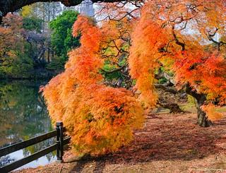 Shinjuku Gyo-en (Shinjuku National Garden)