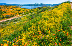 Diamond Valley Lake Wildflower Trail Hemet Southern California Spring Wildflowers Superbloom Elliot McGucken Fine Art Landscape Nature Photography!