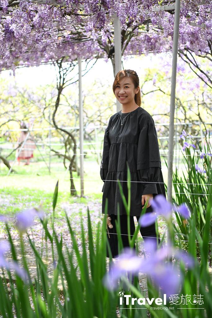 紫藤咖啡園 Damshui Wisteria (28)