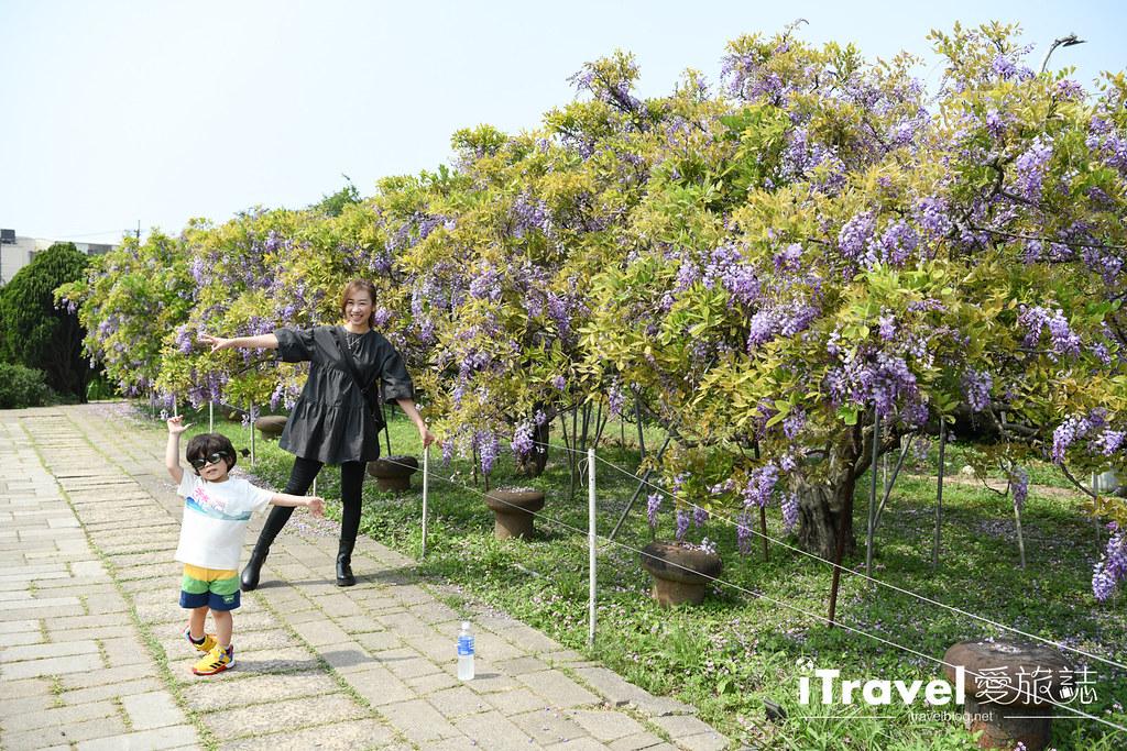 紫藤咖啡園 Damshui Wisteria (9)