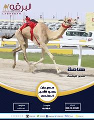 سباق الحيل والزمول (أشواط مفتوحة) بمهرجان سمو الأمير المفدى - مساء 30-3-2021