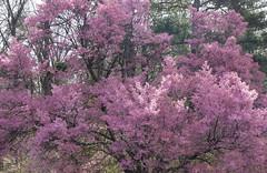 National Arboretum 27 Mar 2021  (318)