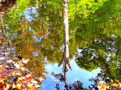 Autumn, Water Reflections