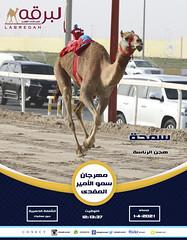 السباق الختامي للحيل والزمول (السيف الذهبي) بمهرجان سمو الأمير المفدى 1-4-2021