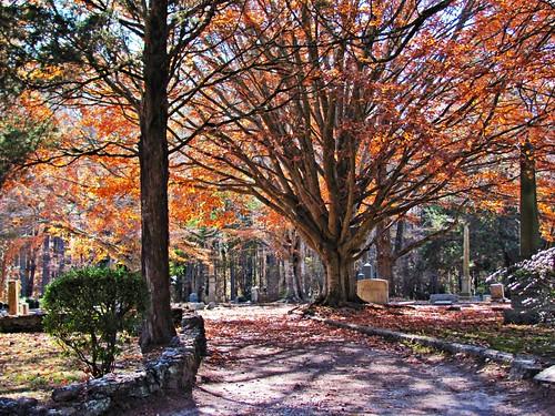 Fairview Cemetery, Warrenton, North Carolina 3