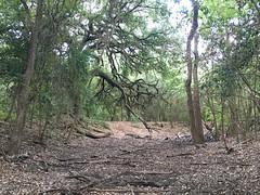 Miller Spring - dry creek bed