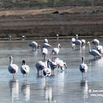 Aves en La Mancha Húmeda. 13-3-2021