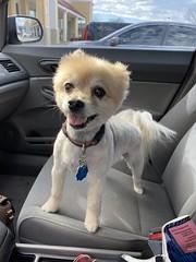 Spring haircut