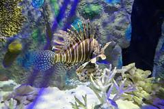 2021 Mote Aquarium - 06 P1010884 adj
