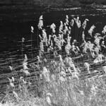 Along the Rhine  (Retina IIIC / Tri-X)