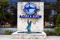2021 Mote Aquarium - 01 P1010965 adj