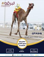سباق الحقايق (أشواط عامة) بمهرجان سمو الأمير المفدى - صباح 20-3-2021