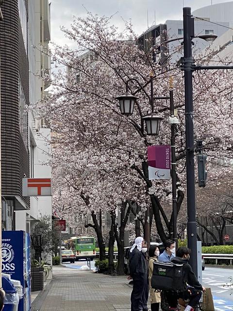 Photo:桜 サクラ 明治通り 恵比寿 2021/3/20 By yto