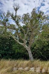 Tree at Bayfront Park