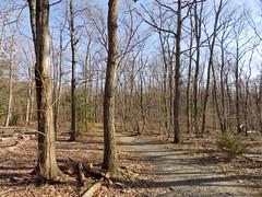 Mason District Park, VA