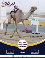 سباق اللقايا (أشواط مفتوحة) بمهرجان سمو الأمير المفدى - صباح 22-3-2021