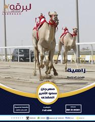 سباق اللقايا (الرموز الذهبية) بمهرجان سمو الأمير المفدى - مساء 22-3-2021
