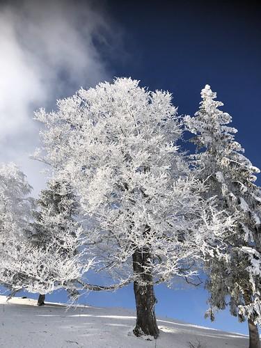 Winter, Jura Mountains