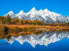 Grand Teton National Park Aspens Autumn Colors Fall Foliage Wyoming Fine Art Landscape Nature Photography Fuji GFX100! Elliot McGucken Master Medium Format Fine Art Landscape Nature Photographer. Fujifilm GFX 100 & Fujinon FUJIFILM Lens