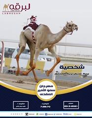 سباق اللقايا (أشواط عامة) بمهرجان سمو الأمير المفدى - صباح 23-3-2021
