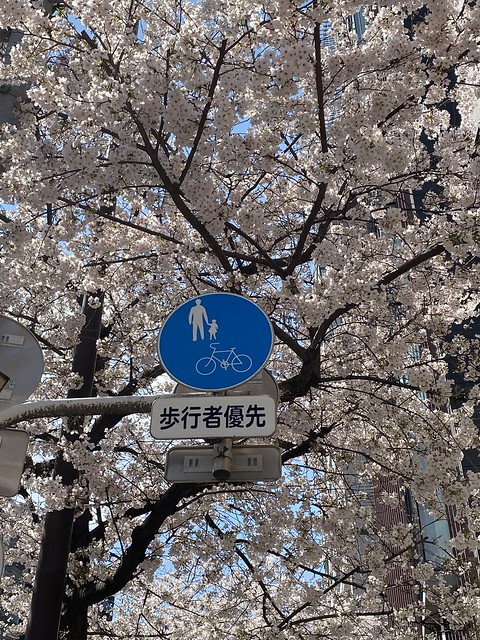 Photo:桜 恵比寿 2021/3/23 By yto