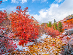 Zion National Park East Side Snowy Autumn Maples Fuji GFX100 Utah Fall Foliage Winter Snow Fine Art Landscape Natura Photography! Elliot McGucken Master Medium Format Fine Art American West Photography! Fujifilm GFX 100 & Fujinon FUJIFILM GF Lens