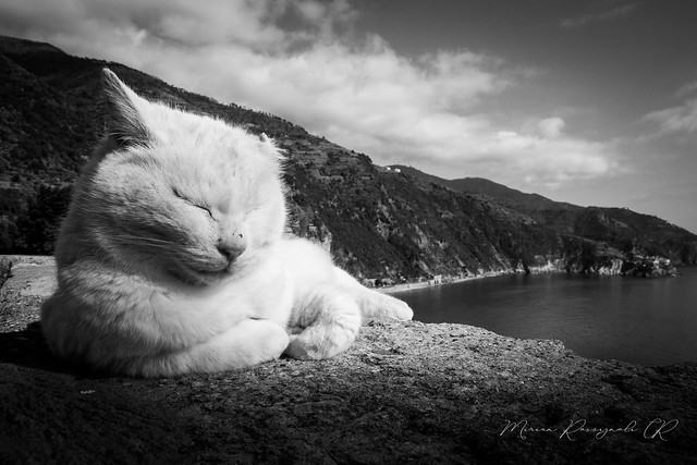 Photo:Cinque Terre: March in Black & White By Miriam Rossignoli