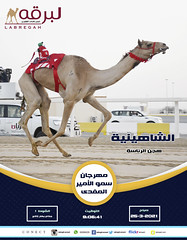 سباق الجذاع (أشواط مفتوحة) بمهرجان سمو الأمير المفدى - صباح 24-3-2021