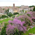 The Roman Forum - https://www.flickr.com/people/40646519@N00/