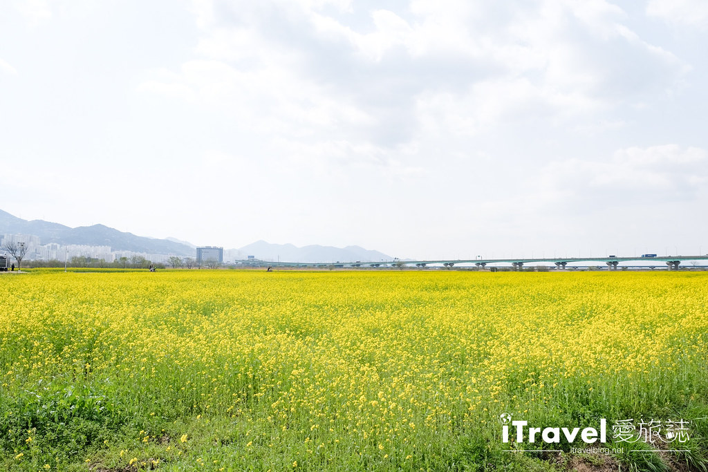 大渚生態公園 Daejeo Ecological Park (8)