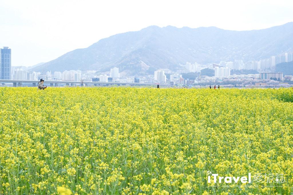 大渚生態公園 Daejeo Ecological Park (22)