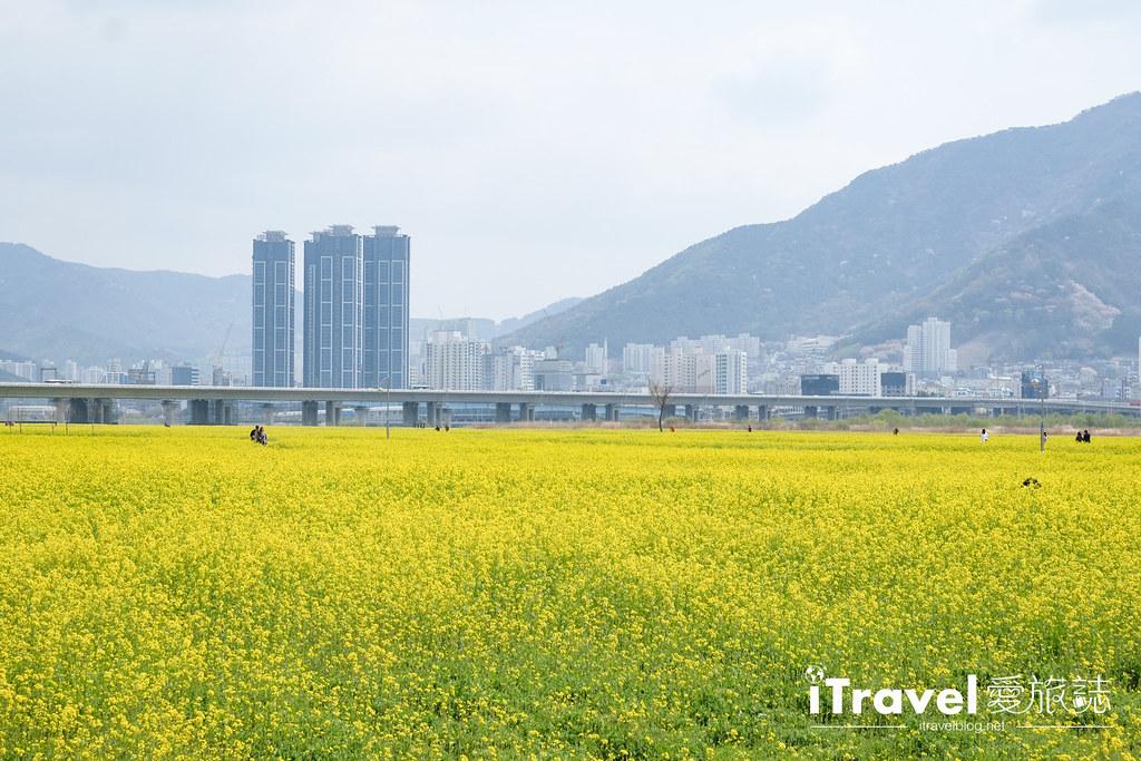 大渚生態公園 Daejeo Ecological Park (9)