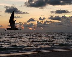 Bird at St. Pete Beach