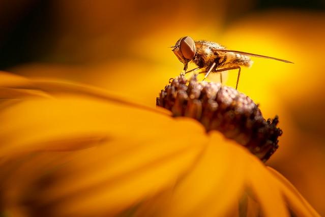 Déjeuner sur une fleur