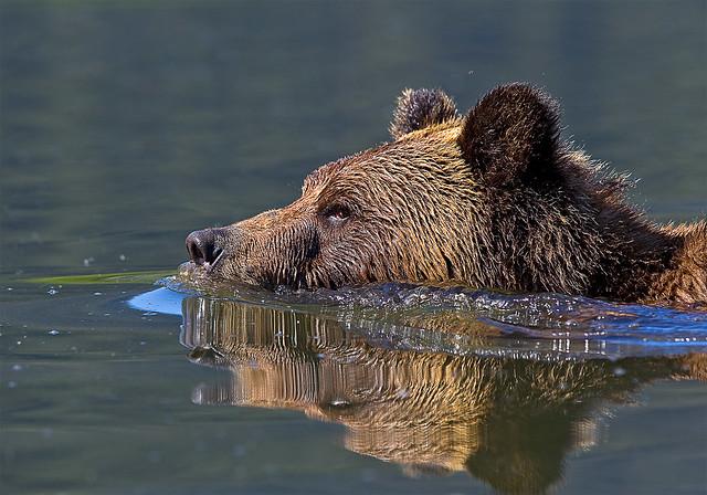 Le nageur solitaire
