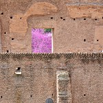 Redbud Through The Ruins - https://www.flickr.com/people/40646519@N00/