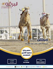 سباق الحيل والزمول (أشواط عامة) بمهرجان سمو الأمير المفدى - صباح 29-3-2021