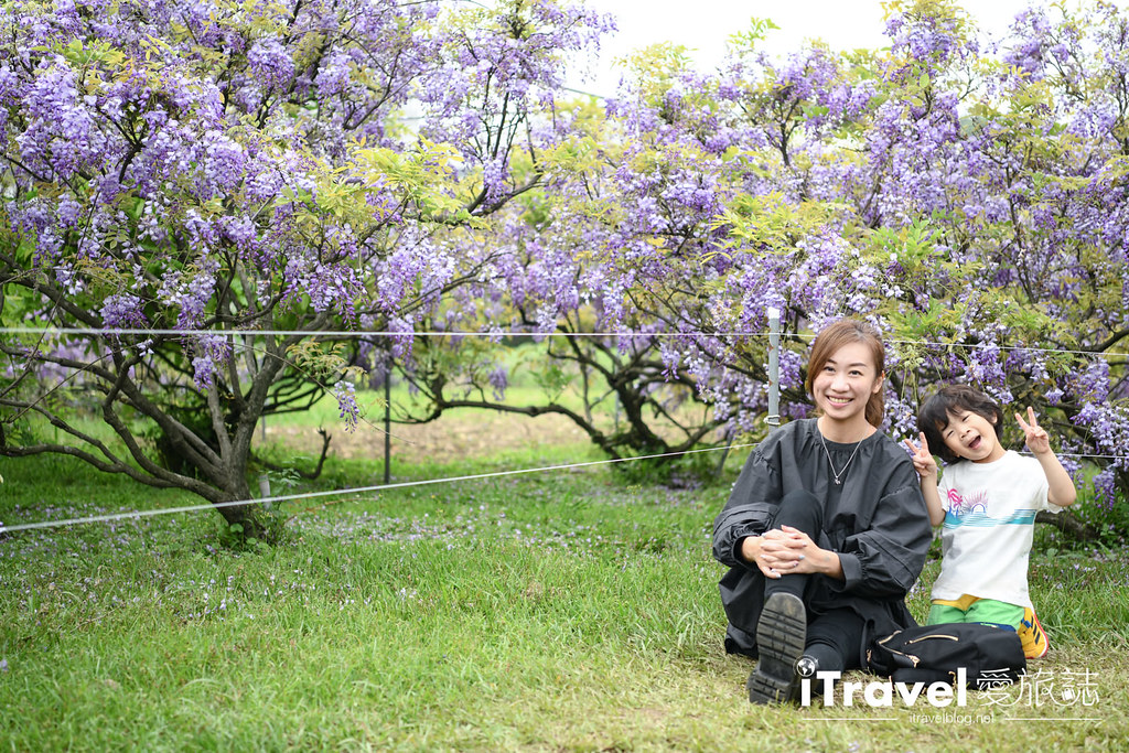 紫藤咖啡園 Damshui Wisteria (59)