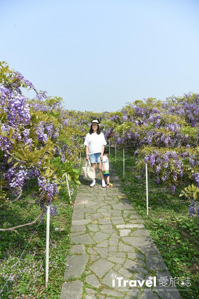 紫藤咖啡園 Damshui Wisteria (31)