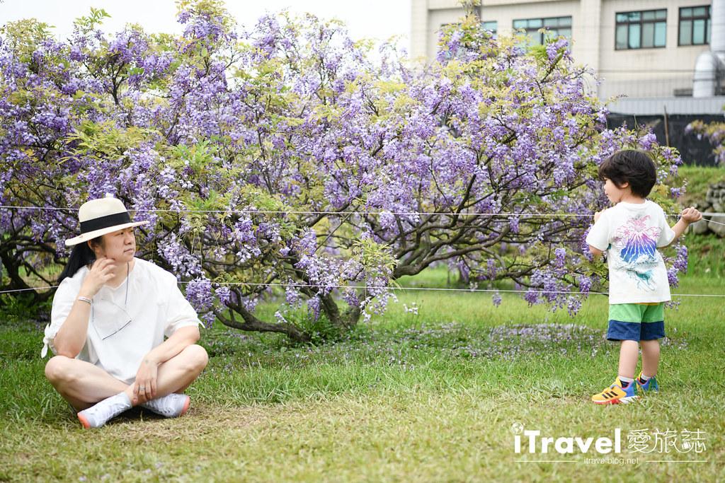 紫藤咖啡園 Damshui Wisteria (61)