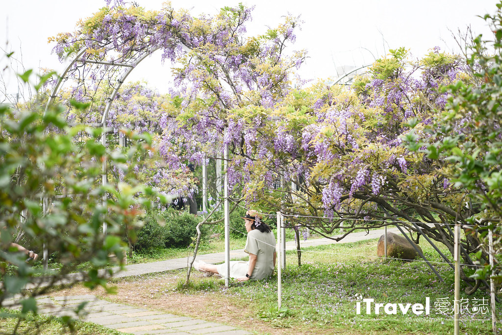 紫藤咖啡園 Damshui Wisteria (47)