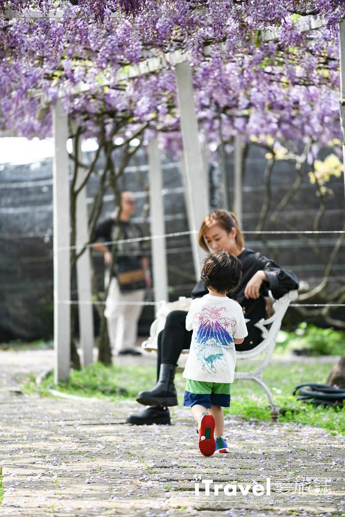 紫藤咖啡園 Damshui Wisteria (44)
