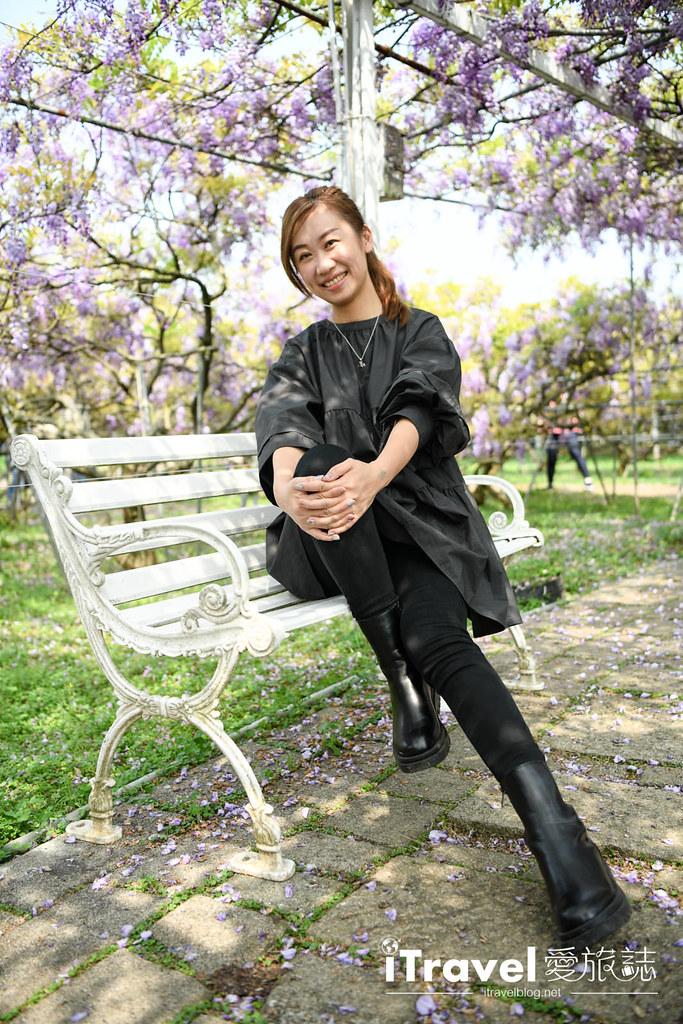 紫藤咖啡園 Damshui Wisteria (40)